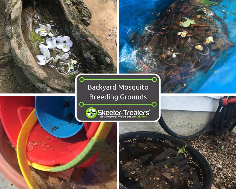 Mosquitoes' Favorite Backyard Breeding Grounds to Watch Out For! - Backyard Breeding Grounds For Mosquitoes - Skeeter-Treaters