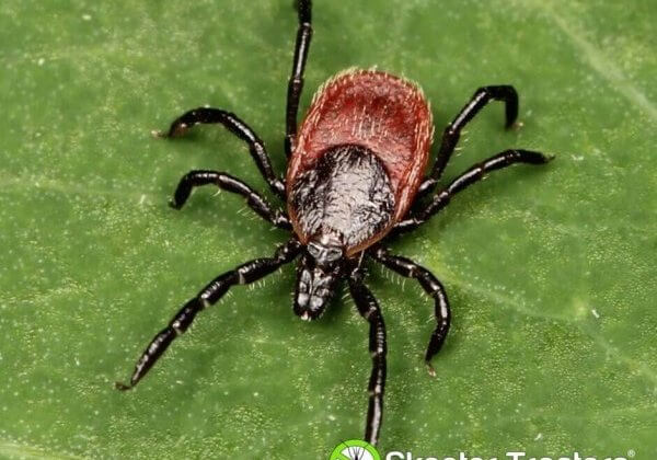 Protect Yourself From Ticks