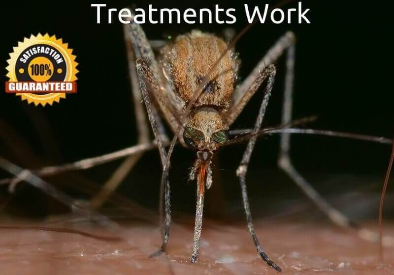 How do Mosquito Treatments Work - FAQ about our Services